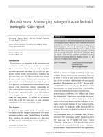 Kocuria rosea: An emerging pathogen in acute bacterial meningitis- Case report