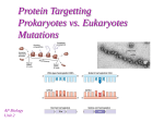 Protein Targetting Prokaryotes vs. Eukaryotes - mvhs