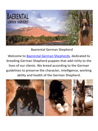 Baerental German Shepherd Puppies For Sale in Texas
