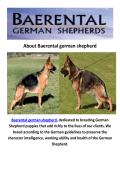 Baerental German Shepherd Puppies For Sale Houston Texas