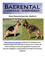 Baerental German Shepherd Puppies For Sale Houston Texas