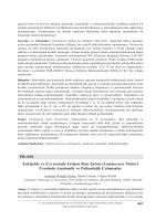 Lamiaceae - Biyoloji Kongreleri