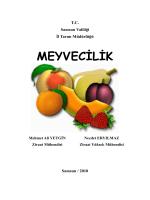 MEYVECİLİK - Samsun İl Gıda Tarım ve Hayvancılık Müdürlüğü