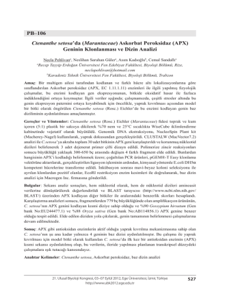 Askorbat Peroksidaz (APX)