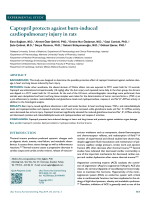 Captopril protects against burn-induced