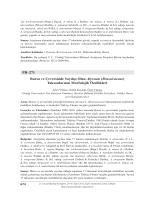 (Brassicaceae) Taksonlarının Morfolojik Özellikleri