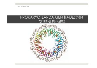 16. Prokaryotlarda Gen İfadesinin Düzenlenmesi.pptx