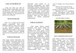 Çilek Yetiştiriciliği - Ankara İl Gıda Tarım ve Hayvancılık Müdürlüğü