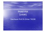PHARYNX (yutak)