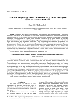 Testicular morphology and in vitro evaluation of frozen epididymal