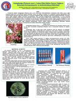 Antepfıstığı (Pistacia vera L.)