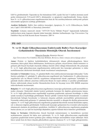 Bağlı Glikozilasyonun Embriyonik Balb/c Fare