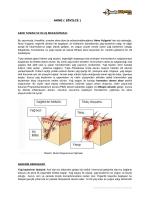 akne tanımı ve oluş mekanizması