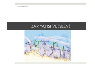 8. bölüm.pptx - Prof. Dr. Bektaş TEPE