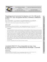 Morphological and Anatomical Investigations on in Vitro Micrografts