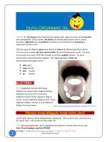 DUYU ORGANIMIZ DİL - Schule mehrsprachig