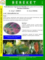 Trabzon Hurması Yaprak Leke Hastalığı