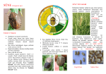 Süne Mücadelesi - Ankara İl Gıda Tarım ve Hayvancılık Müdürlüğü