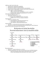 ADRENAL BEZ HASTALIKLARI • Adrenal bezler retroperitoneal
