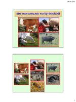 süt hayvanları yetiştiriciliği