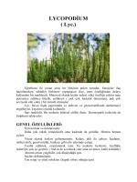 Yazınını devamını pdf olarak görüntülemek için tıklayınız