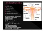 ® Ovaryum ® Tuba uterina ® Uterus ® Vajina ® Dış genital organlar