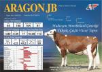 aragon - Demsa Genetik