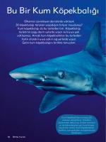 Bu Bir Kum Köpekbalığı