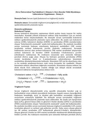 Deney 6 - Serum lipid tayini
