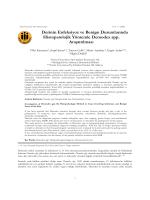 Derinin Enfeksiyoz ve Benign Durumlarında Histopatolojik Yöntemle