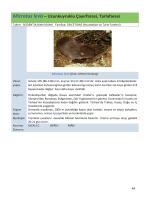 Yalova İlinin Memeli Faunası Kitabı 2
