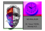 NEVRALJİLER Dr. Yavuz YÜCEL Nöroloji A.D.