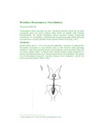 Dryinidae (Hymenoptera: Chrysidoidea)
