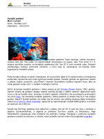 Koraljni grebeni