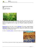 Zanimljiv svijet morskih algi