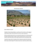 NAVODNJAVANJE VINOGRADA Zašto navodnjavati vinograde