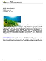 Morske cvjetnice Jadrana