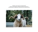 Tradicijsko ovčarstvo otoka Cresa: prilog istraživanju Beitrag zur