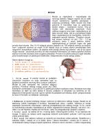 MOZAK Mozak je najsloženiji i najznačajniji dio nervnog sistema