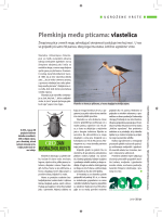 bioraznolikosti - biodiversity