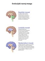 Karta mozga (PDF)