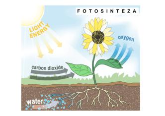 3. предавање - Фотосинтеза
