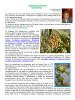 Μελισσοκομικά Φυτά Ευκάλυπτος