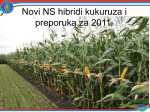 Tisa - NS seme