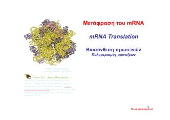 2. K29 Μετάφραση του mRNA