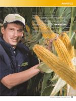kukuruz - fao 400 - RWA Raiffeisen Agro