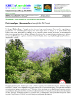Παλίσανδρος - Kreta Umweltforum