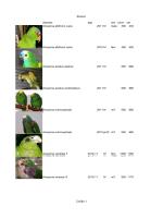 Φύλλο1 Σελίδα 1 Species age sex price vat Amazona albifrons nana