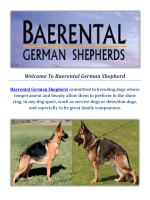 Baerental German Shepherd Puppies For Sale in Massachusetts