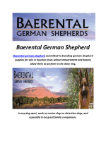 Baerental German Shepherd Puppies For Sale In NH